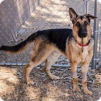 Adopt A Pet :: Max Jr - Phoenix, AZ