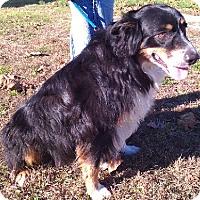 Adopt A Pet :: Hobbes - Aurora, IL