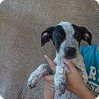 Adopt A Pet :: Kenya - Oviedo, FL