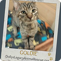Adopt A Pet :: GOLDIE - Lincoln, NE
