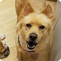 Adopt A Pet :: Suzie - Deltona, FL