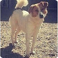 Adopt A Pet :: Bella - Abandoned - Villa Rica, GA