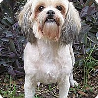 Adopt A Pet :: Addison - Sugarland, TX