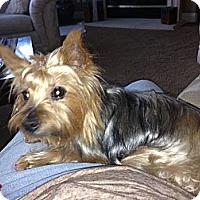 Adopt A Pet :: Sophie - Rescue, CA