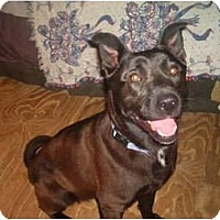 Adopt A Pet :: Sophie - North Jackson, OH
