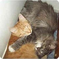 Adopt A Pet :: JESSIE N NANA - Little Neck, NY