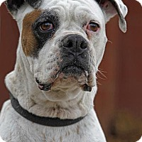 Adopt A Pet :: Bailey - Phoenix, AZ