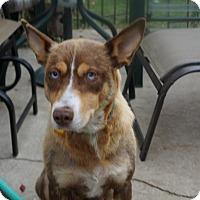 Adopt A Pet :: Emerson - Saskatoon, SK