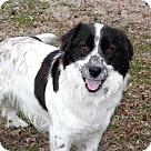 Adopt A Pet :: LENNON