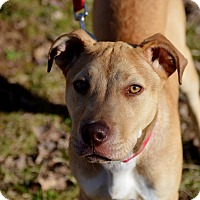 Adopt A Pet :: Delphine - nashville, TN