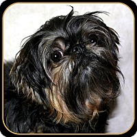 Adopt A Pet :: TABITHA ANN - ADOPTION PENDING - Seymour, MO
