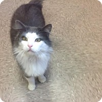 Adopt A Pet :: Gizmo - Byron Center, MI