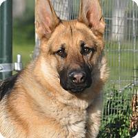 Adopt A Pet :: Django - Hamilton, MT
