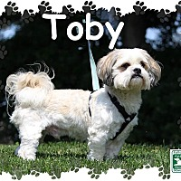 Adopt A Pet :: Toby - Fallston, MD