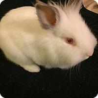 Adopt A Pet :: Billie - Hillside, NJ