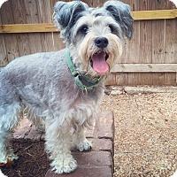 Adopt A Pet :: Bailey - Austin, TX