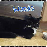 Adopt A Pet :: Woods - Simi Valley, CA