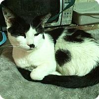 Adopt A Pet :: Jackson - New York, NY