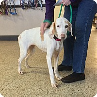 Adopt A Pet :: Dolly Parton - Virginia Beach, VA