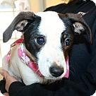 Adopt A Pet :: Jada