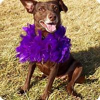 Adopt A Pet :: COCOA - New Cumberland, WV