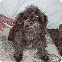 Adopt A Pet :: MOCHA - Raleigh, NC