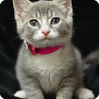 Adopt A Pet :: Hyacinth	160477 - Atlanta, GA