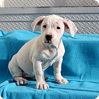 Adopt A Pet :: Dottie - Los Angeles, CA