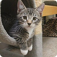 Adopt A Pet :: Justin - Balto, MD