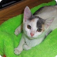 Adopt A Pet :: SALLY - Medford, WI