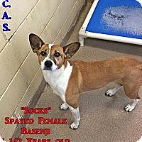 Adopt A Pet :: 1-6 Socks - Triadelphia, WV