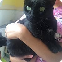 Adopt A Pet :: Lockett - Richboro, PA