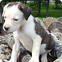 Adopt A Pet :: Breeze~adopted! - Glastonbury, CT