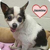 Chihuahua Mix Dog for adoption in Austin, Texas - Jasmine
