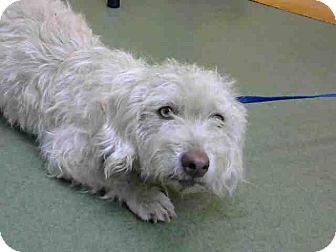 Terrier (Unknown Type, Small) Mix Dog for adoption in San Bernardino, California - URGENT on 10/10 @DEVORE