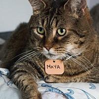 Adopt A Pet :: Maya - Montreal, QC