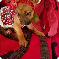 Adopt A Pet :: Snowflake - Detroit, MI