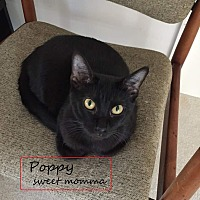 Adopt A Pet :: Poppy - Carthage, NC