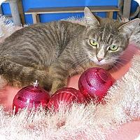Adopt A Pet :: Noel - Glendale, AZ