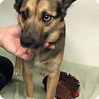 Adopt A Pet :: Taco - Hibbing, MN