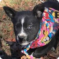 Adopt A Pet :: Aerial - Sylacauga, AL