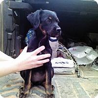 Adopt A Pet :: Annabelle - Ellaville, GA