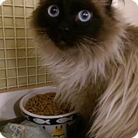 Adopt A Pet :: Lilah - Ogden, UT