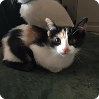 Adopt A Pet :: Squirt - Chandler, AZ