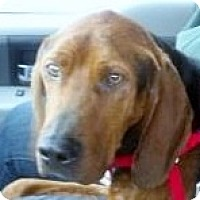 Adopt A Pet :: Luke - St, Augustine, FL