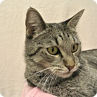 Adopt A Pet :: Bobbi - Foothill Ranch, CA
