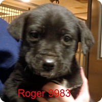Adopt A Pet :: Roger - baltimore, MD