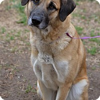 Adopt A Pet :: Cady - Fort Riley, KS