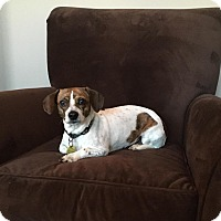 Adopt A Pet :: Alexis - Decatur, GA