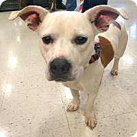 Adopt A Pet :: Bunny in CT - East Hartford, CT